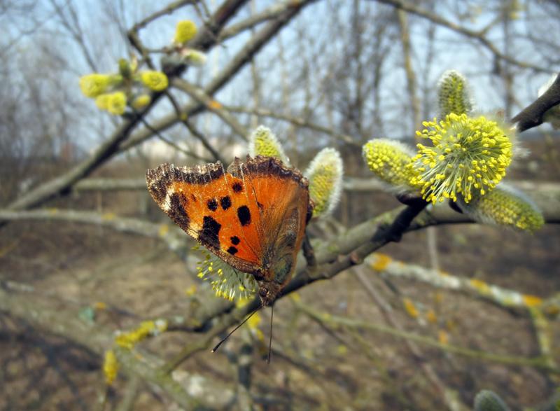 Оранжевая весна