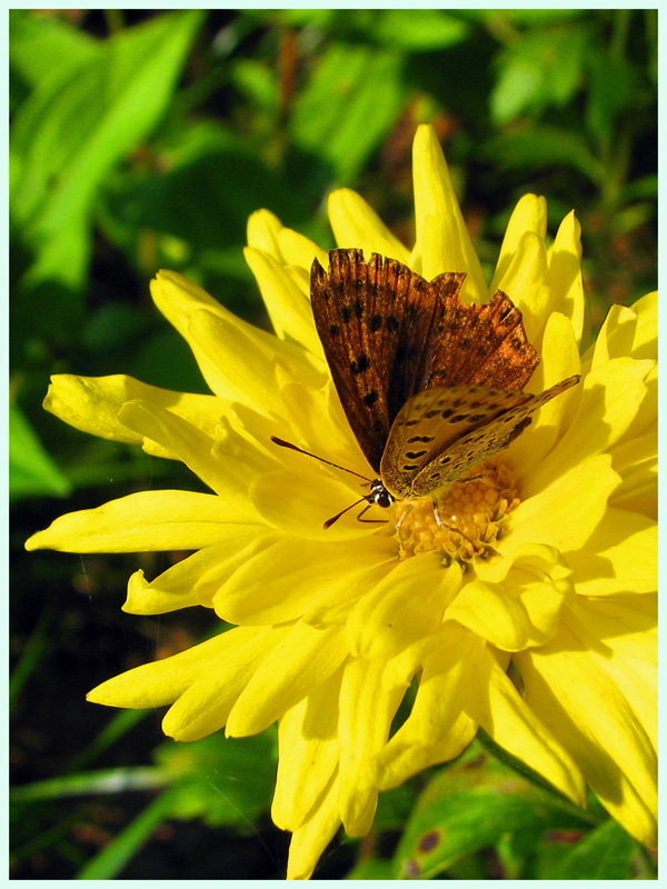 Солнышко и бабочка...