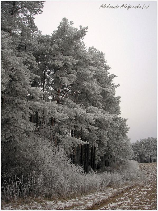 Серебряный лес...