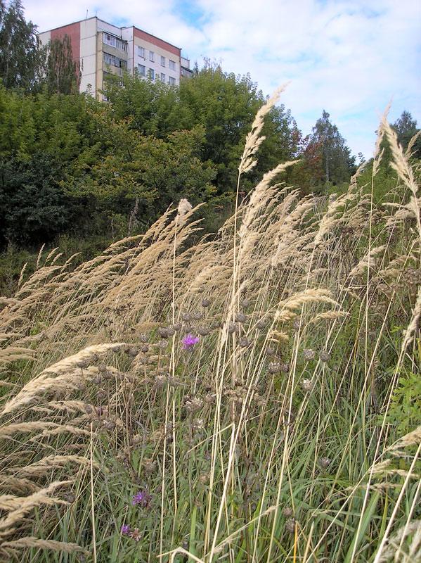 Ветер в травах шелестит...
