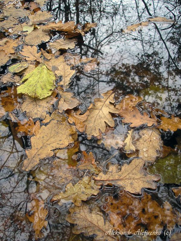 Осенняя мозаика...