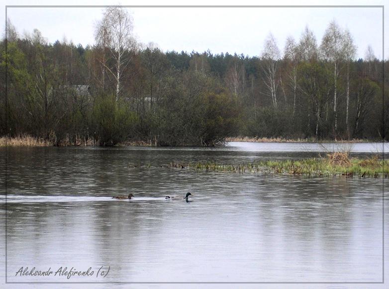 На весенней речке...