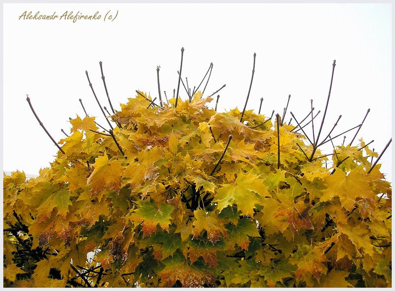 Осень, рыжая подружка...